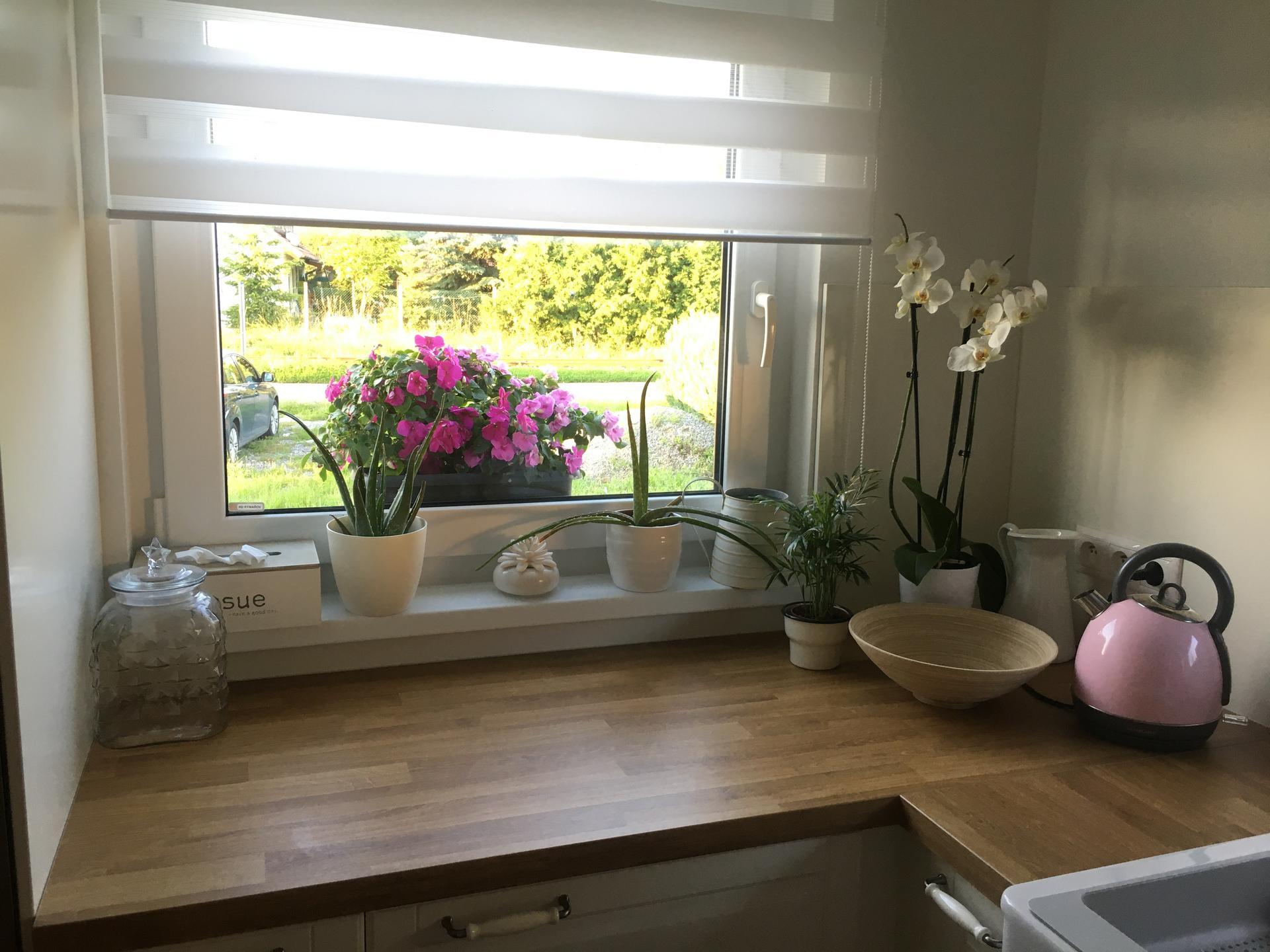 Naše kuchyň 2020 - Moje květinová džungle