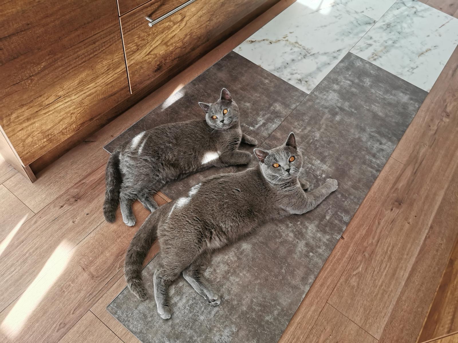 Euroline Bungalov 1871 - 23.12.2019 Dorazili podlahy a mačky si ich aj hneď obľúbili 🙈🤣