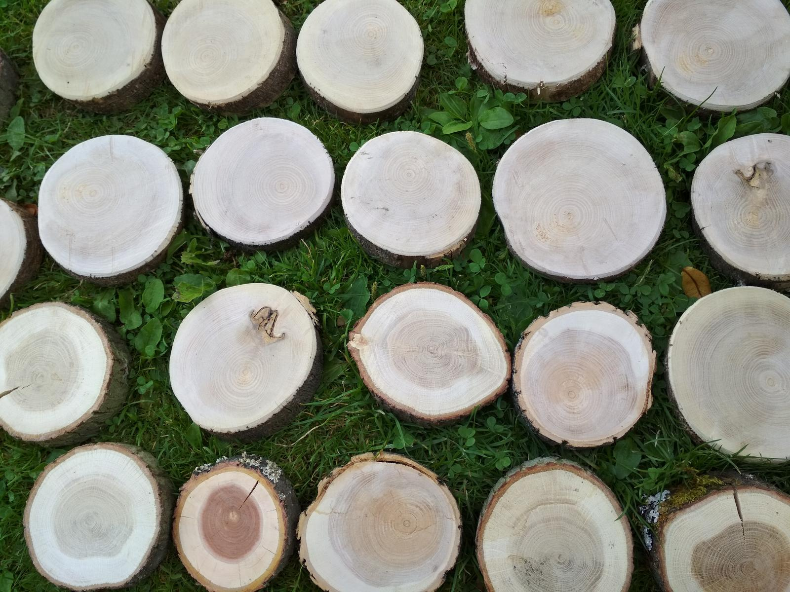 Dřevěná kulatina - Obrázek č. 2