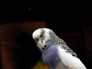 Další koníček mého tatínka exotické ptactvo