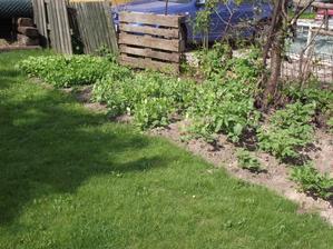 moje mini políčko,ředkvičky,hrách,brambory,pak i celer a rajčata