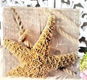 sklenený obraz morská hviezda,