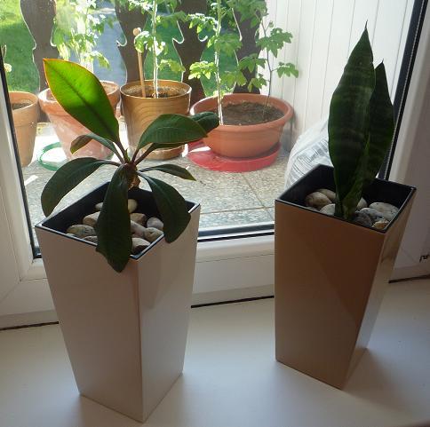 Moje kvety a rastlinky, ktoré pestujem - Zasadila som nové kvetinky