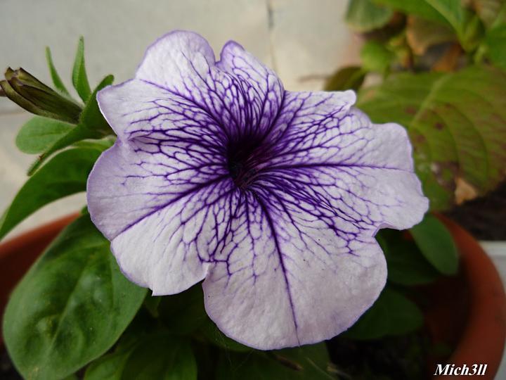Moje kvety a rastlinky, ktoré pestujem - Obrázok č. 56
