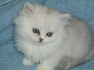 Do nového domčeka by sme chceli takéto mačiatko :-)