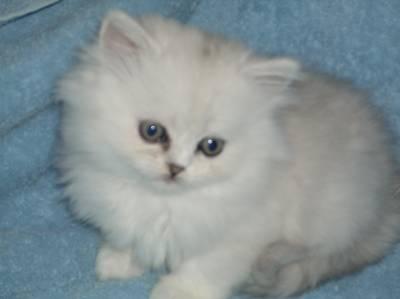 Kuchynka - Návrhy a inšpirácie - Do nového domčeka by sme chceli takéto mačiatko :-)