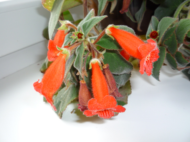 Moje kvety a rastlinky, ktoré pestujem - Obrázok č. 4