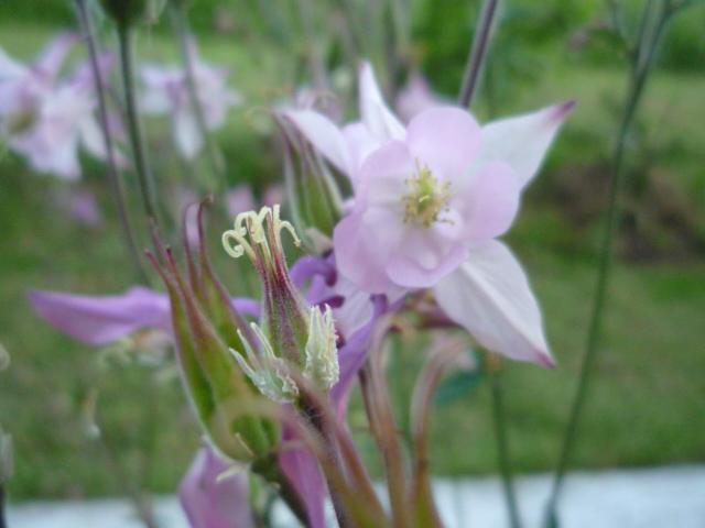 Moje kvety a rastlinky, ktoré pestujem - Obrázok č. 12