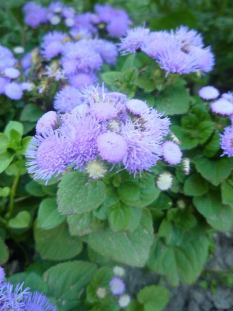 Moje kvety a rastlinky, ktoré pestujem - Obrázok č. 5
