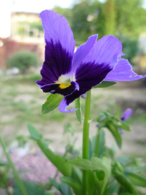 Moje kvety a rastlinky, ktoré pestujem - Obrázok č. 9