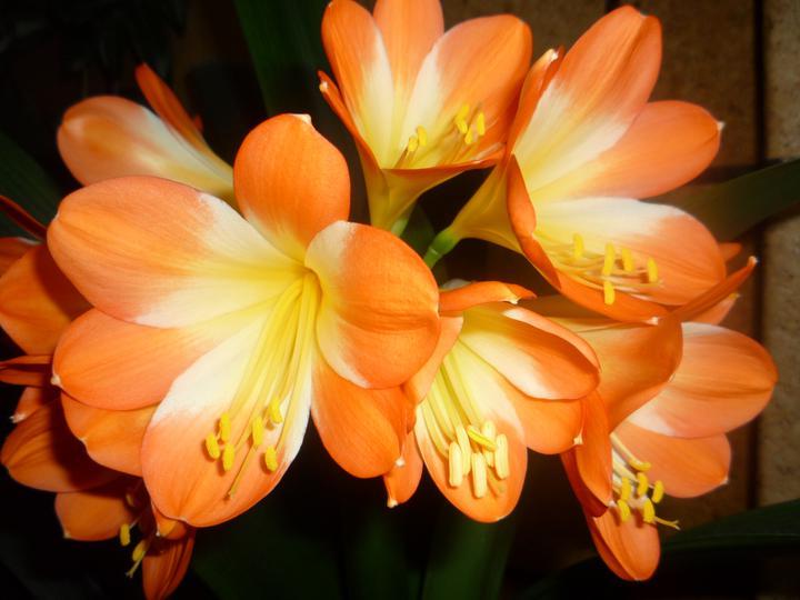 Moje kvety a rastlinky, ktoré pestujem - Obrázok č. 15