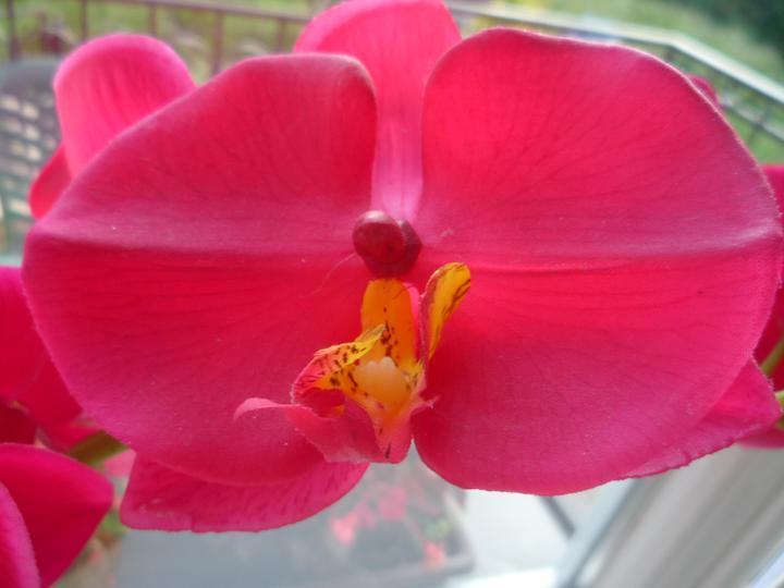 Moje kvety a rastlinky, ktoré pestujem - Obrázok č. 18