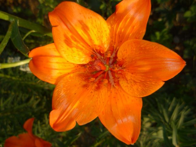 Moje kvety a rastlinky, ktoré pestujem - Obrázok č. 21