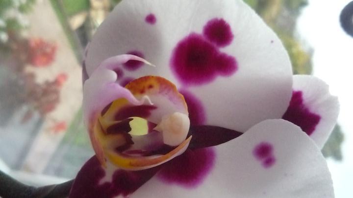 Moje kvety a rastlinky, ktoré pestujem - Obrázok č. 35