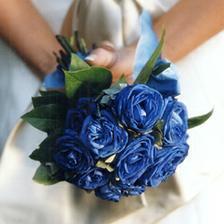 Kedysi toto boli moje najobľúbenejšie kvety a znova o nich začínam uvažovať a nedávno som videla modré kálie to by už aké bolo...