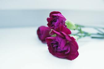 hlavnou súčasťou kytičky budú fialové karafiáty, aby ladila s topánkami