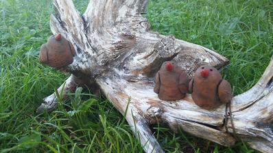 Mini vtáčiky