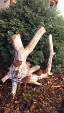 Mini vtáčiky na starom dreve