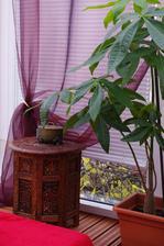 krásny stolík za lacný peniaz, mimoriadne výhodná kúpa na burze starožitností