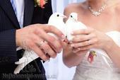 Půjčení páru holoubků,