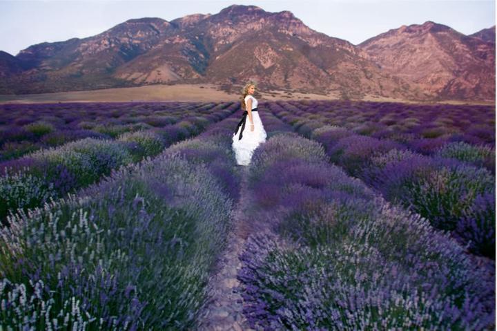 Wedding in Provence - Obrázok č. 8