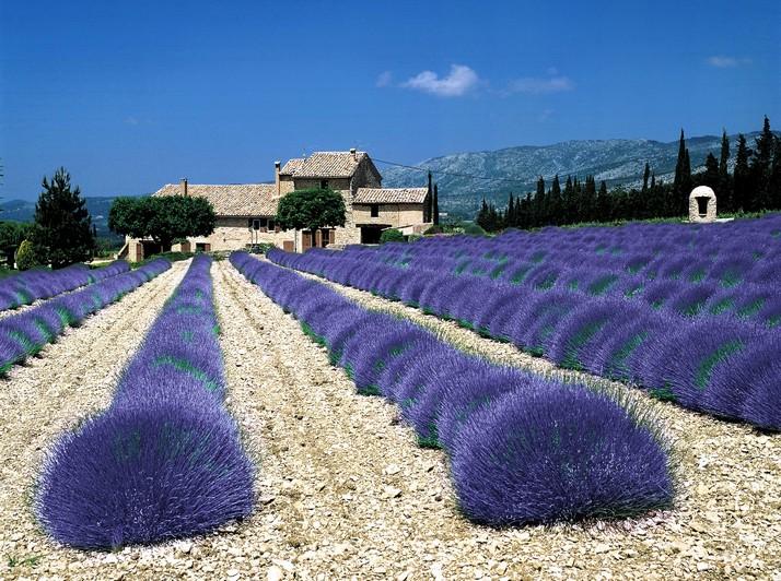 Wedding in Provence - Obrázok č. 47