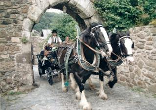 Jó, tak tyhle koně jsou nádherný, mě ale poveze koní 133 pod červenou kapotou