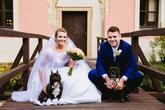 svatební focení se psy