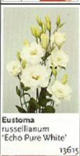 z těchto květů bude moje kytička :)
