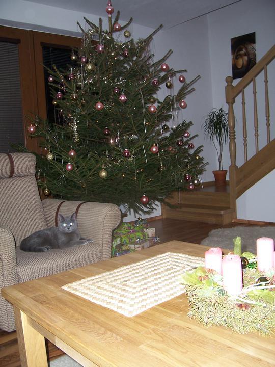 Vánoce 2010 - Tomik ani nesplhal po stromecku, coz nas docela prekvapilo:-)