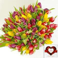takéto farebné tulipány urcite