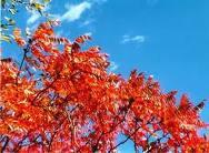 Doufám, že listí už bude mít tu správnou barvu