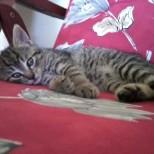 Hľadáte do svojich domácností miláčika? Darujem krásne mačiatka :-) - Obrázok č. 1