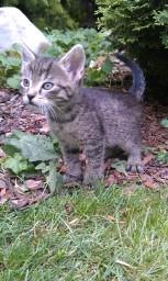 Hľadáte do svojich domácností miláčika? Darujem krásne mačiatka :-) - Obrázok č. 2