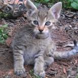 Hľadáte do svojich domácností miláčika? Darujem krásne mačiatka :-) - Obrázok č. 3