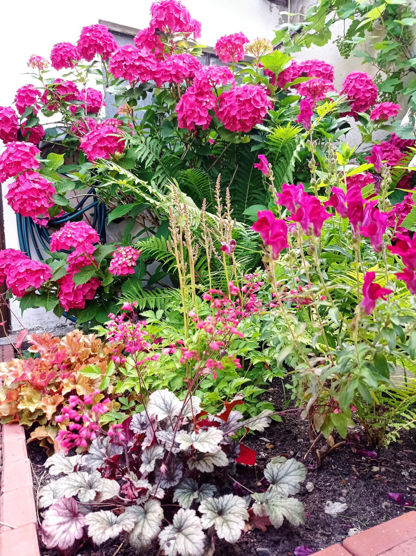 Stinný kout letos krásně kvete - Obrázek č. 1