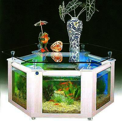 Život s rybičkami :) - Obrázok č. 3