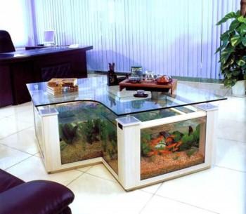 Život s rybičkami :) - Obrázok č. 12