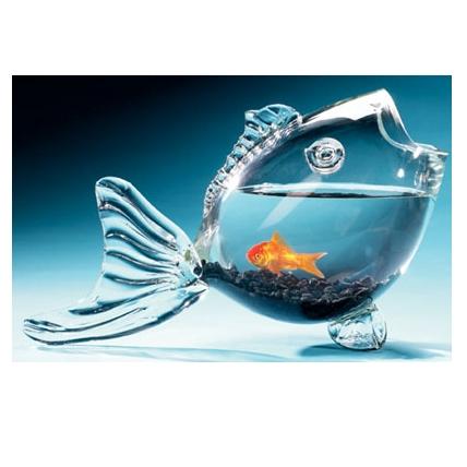 Život s rybičkami :) - Obrázok č. 32