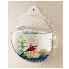 Život s rybičkami :) - Obrázok č. 34