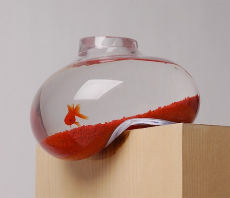 Život s rybičkami :) - Obrázok č. 35
