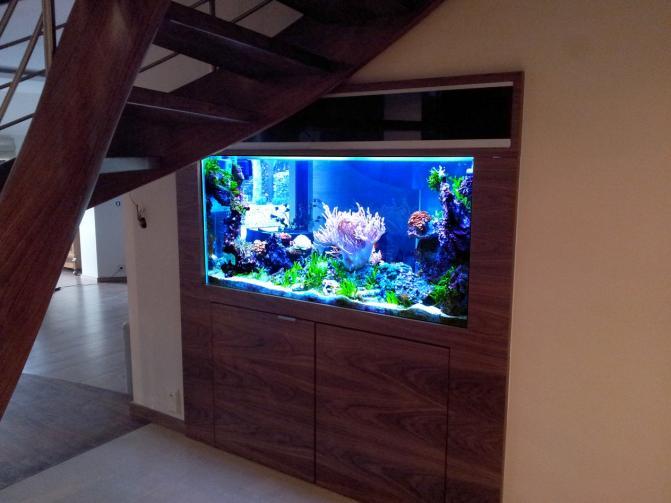 Život s rybičkami :) - Obrázok č. 92