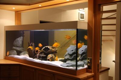 Život s rybičkami :) - Obrázok č. 115