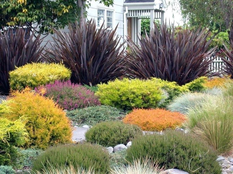 Zahrada bez klasického trávníku - Obrázek č. 11