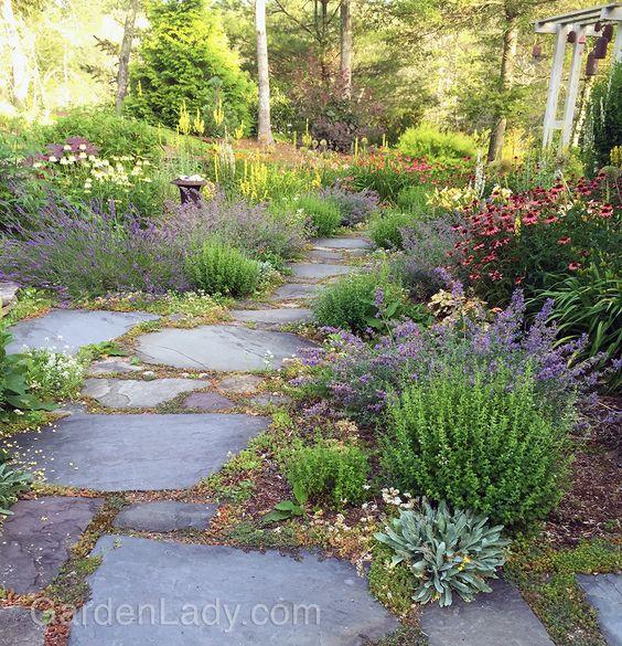 Zahrada bez klasického trávníku - Obrázek č. 27
