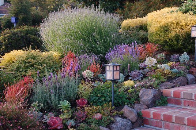 Zahrada bez klasického trávníku - Obrázek č. 76