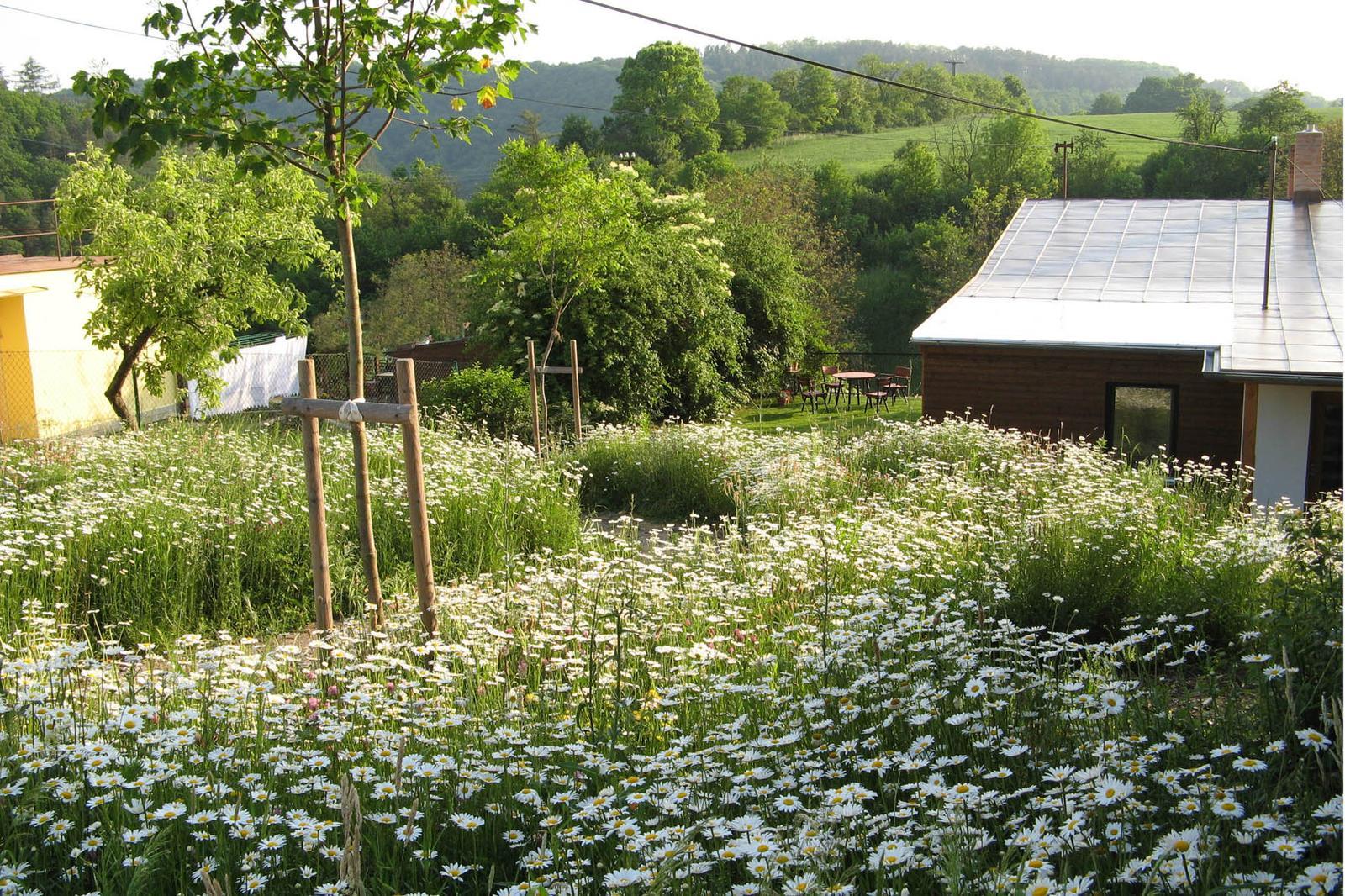 Zahrada bez klasického trávníku - Obrázek č. 89