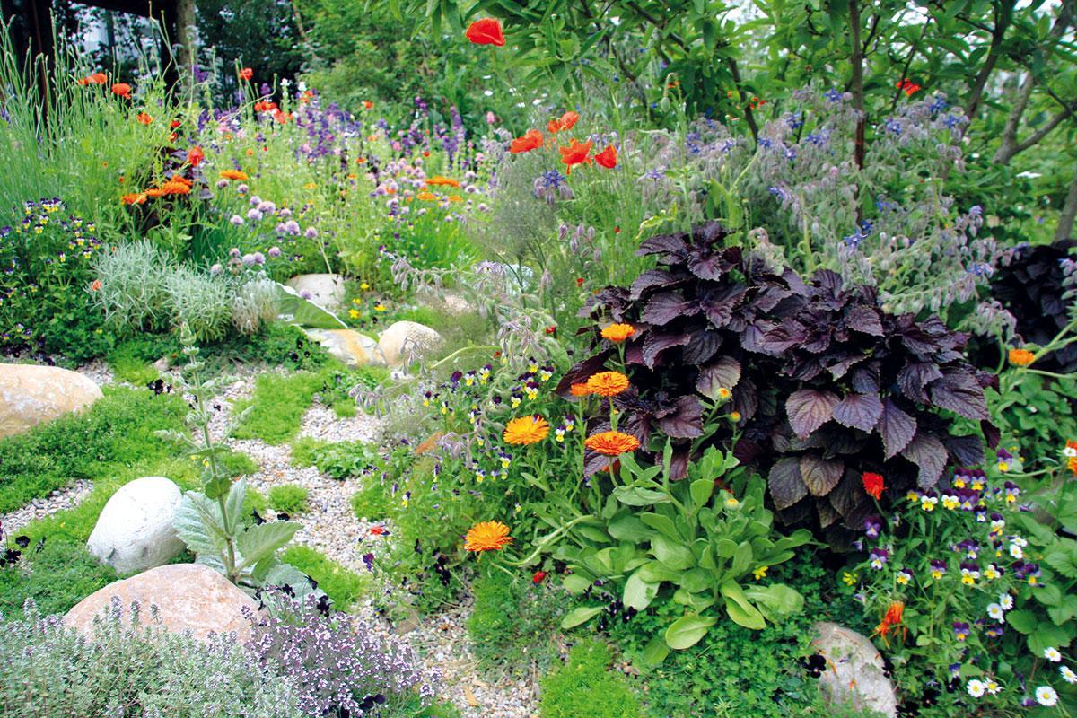 Zahrada bez klasického trávníku - Obrázek č. 90