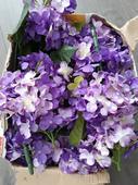 fialové kvety hortenzia,