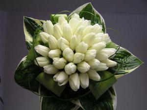 v září asi tulipány nebudou :-(